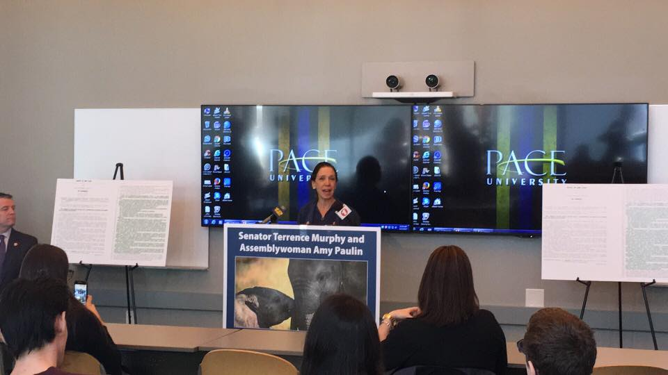 Assemblywoman Amy Paulin was at Pace University on Feb. 17 with Senator Terrance Murphy to discuss the Elephant Protection Act, which they authored and introduced with the help of Pace students.