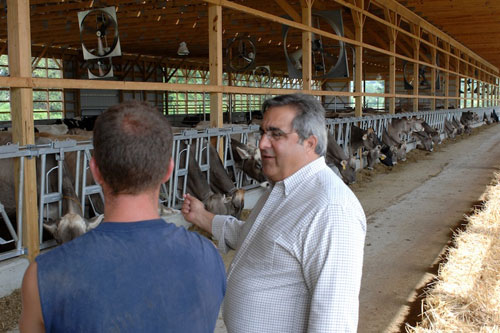 Assemblyman Joe Giglio in the barn at Hill�s Dairy Farm in Cattaraugus.